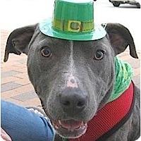 Adopt A Pet :: Buddy - Kingwood, TX