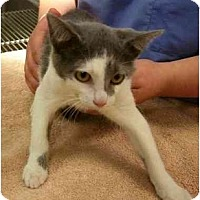 Adopt A Pet :: Ruby - Odenton, MD