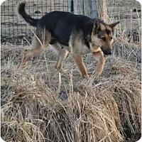 Adopt A Pet :: Nina - Hamilton, MT