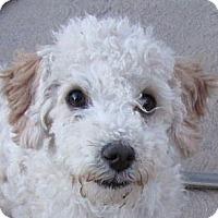 Adopt A Pet :: Teddy - San Ysidro, CA