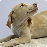 Adopt A Pet :: Meadow - Philadelphia, PA