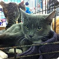 Adopt A Pet :: Emily - Pittstown, NJ