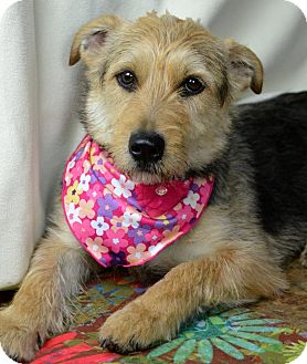 Terrier (Unknown Type, Medium) Mix Dog for adoption in Jackson, Mississippi - Jersey Girl