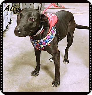 Labrador Retriever Mix Dog for adoption in Ahoskie, North Carolina - Baby Girl (Ally)