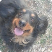 Adopt A Pet :: MOLLY - Forest Ranch, CA