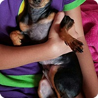 Adopt A Pet :: Jacob - Malaga, NJ