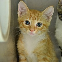Adopt A Pet :: 10311388 - Brooksville, FL