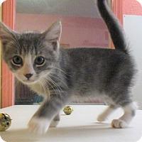 Adopt A Pet :: Poppy - Reeds Spring, MO