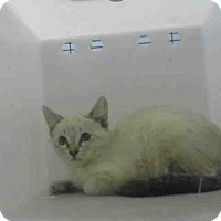 Adopt A Pet :: A042836 - Jackson, CA