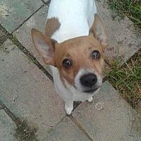Adopt A Pet :: Spunky - Beachwood, OH