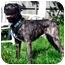 Photo 3 - Patterdale Terrier (Fell Terrier) Mix Dog for adoption in Guelph, Ontario - Rudy