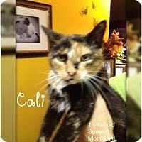 Adopt A Pet :: Cali - Mobile, AL