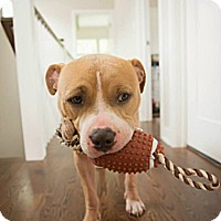 Adopt A Pet :: Feeney - Chicago, IL