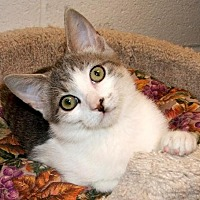 Adopt A Pet :: Logan - Atco, NJ