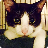 Adopt A Pet :: Tango and Pony - Columbia, MD