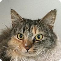 Adopt A Pet :: Lady - Winchester, CA