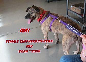 Terrier (Unknown Type, Medium)/Shepherd (Unknown Type) Mix Dog for adoption in Huddleston, Virginia - Amy