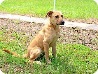 Labrador Retriever Mix Dog for adoption in Oakdale, Louisiana - Peaches