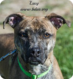 Australian Cattle Dog Mix Dog for adoption in Cheyenne, Wyoming - Lucy
