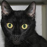 Adopt A Pet :: Keisha - Ruidoso, NM