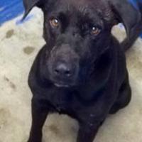 Adopt A Pet :: Nelson - Greenville, KY