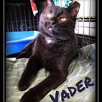 Adopt A Pet :: Vader - Hartford City, IN