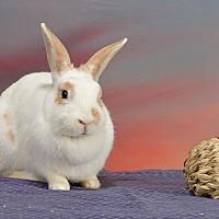 Adopt A Pet :: Katniss - Marietta, GA