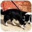 Photo 3 - Border Collie/Corgi Mix Dog for adoption in San Pedro, California - MO