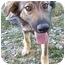 Photo 1 - German Shepherd Dog Mix Puppy for adoption in Waterbury, Connecticut - Sarah