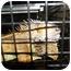 Photo 4 - Iguana for adoption in El Cajon, California - Iggy