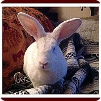 Adopt A Pet :: Damon - Williston, FL