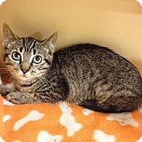 Adopt A Pet :: Julia - Farmingdale, NY