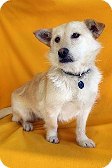 Terrier (Unknown Type, Medium) Mix Dog for adoption in Westminster, Colorado - Agnes