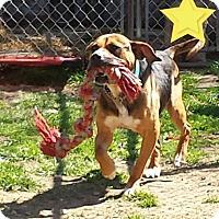 Adopt A Pet :: Taz - Fayette City, PA