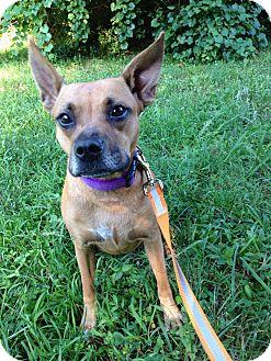 Boxer Mix Dog for adoption in Lexington, North Carolina - Snuggy