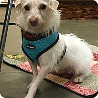 Adopt A Pet :: Malcolm - Gig Harbor, WA