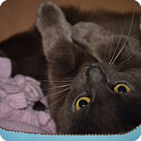 Adopt A Pet :: Bluebell - Byron Center, MI