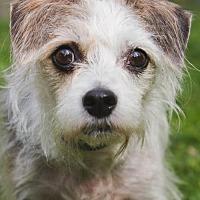 Adopt A Pet :: Windy - Asheville, NC