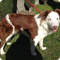 Adopt A Pet :: RORY - San Pedro, CA