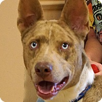 Adopt A Pet :: Sparky - Sprakers, NY