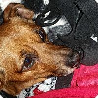Adopt A Pet :: Kiki - Decatur, GA