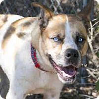 Adopt A Pet :: Quincy - Agoura, CA