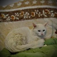 Adopt A Pet :: Casper - North Battleford, SK