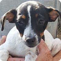 Adopt A Pet :: Jack - Colonial Heights, VA