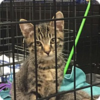 Adopt A Pet :: Dani - Alamo, CA