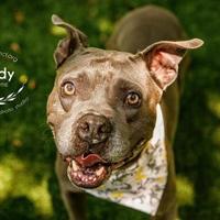 Adopt A Pet :: Grady - Kansas City, MO