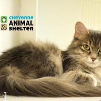 Adopt A Pet :: Korn - Cheyenne, WY