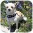 Photo 1 - Chihuahua Dog for adoption in Berkeley, California - Smalls
