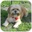 Photo 3 - Lhasa Apso Dog for adoption in Lockhart, Texas - Jasmine