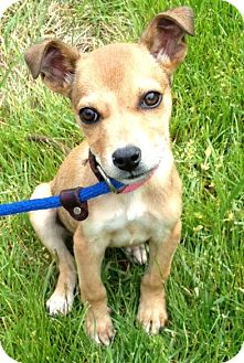 Hound (Unknown Type) Mix Puppy for adoption in Waldorf, Maryland - Sprout